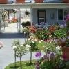 Lush Garden 2009